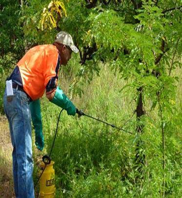 Martindale Creek Landcare Woody-Weeds-Workshop-report-24-2