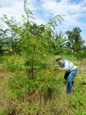 Martindale Creek Landcare Woody-Weeds-Workshop-report-24-5
