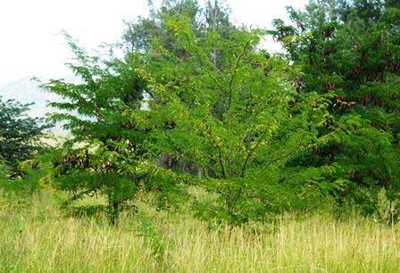 Martindale Creek Landcare Woody-Weeds-Workshop-report-24-3