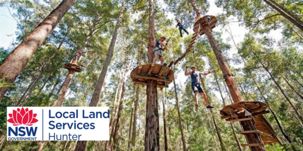 Blue Gum Hills Tree Top Adventures @ Tree Tops Adventure Park MInmi | Minmi | New South Wales | Australia