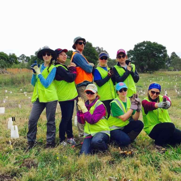Volunteers Complete Planting of 12,000 trees at Hexham Swamp