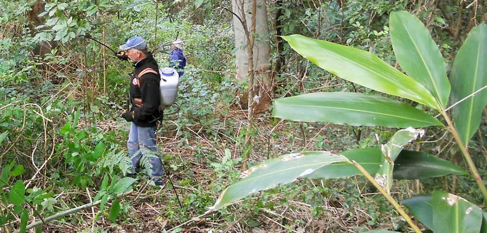 Foundation of National Parks and Wildlife lantana clearing