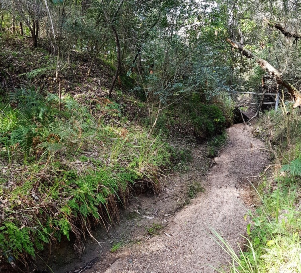 Hunter Region Landcare receives funding to Rehabilitate Swamp Creek, Abermain
