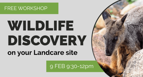WILDLIFE DISCOVERY East Maitland @ Earth Care Park | Mulbring | New South Wales | Australia