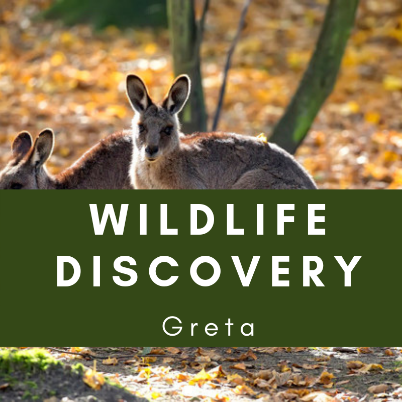 wildlife discovery greta
