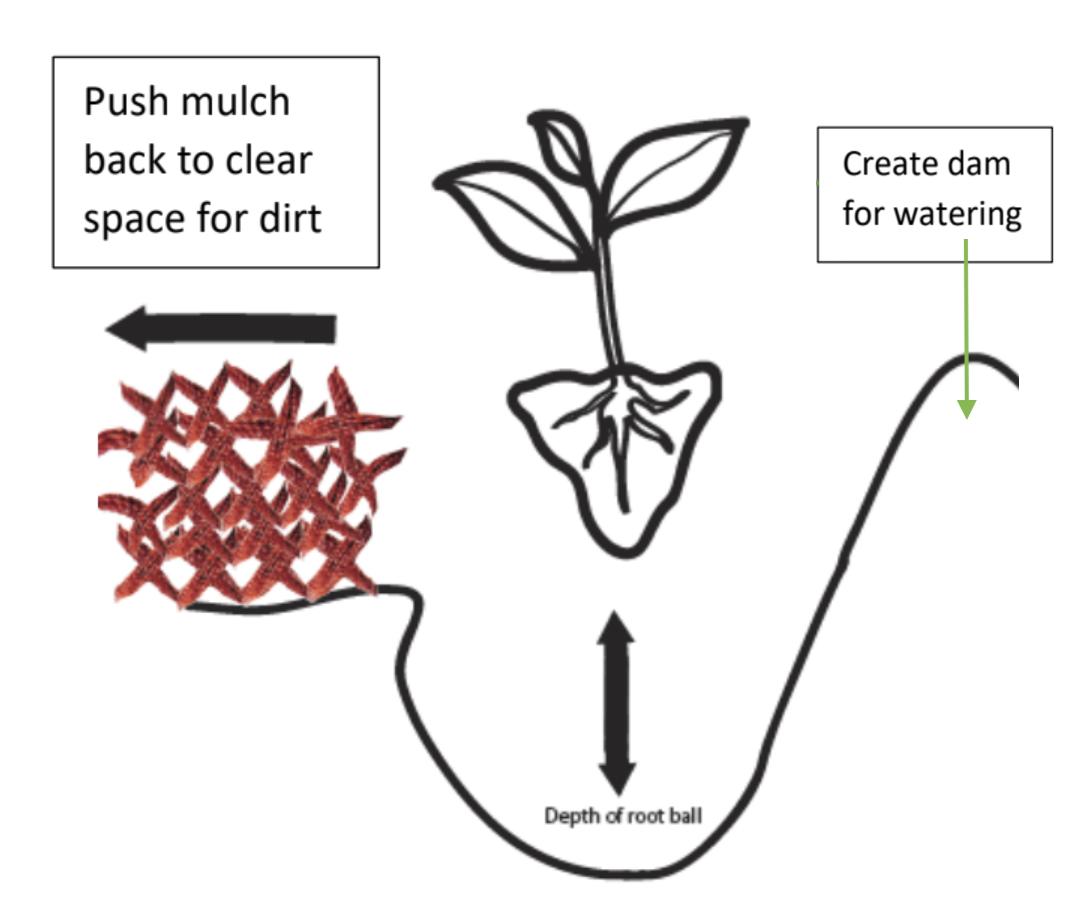 Tubestock Planting Guide