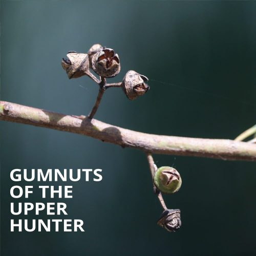 Gumnuts of the Upper Hunter