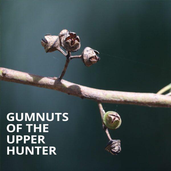 Gumnuts of the Upper Hunter