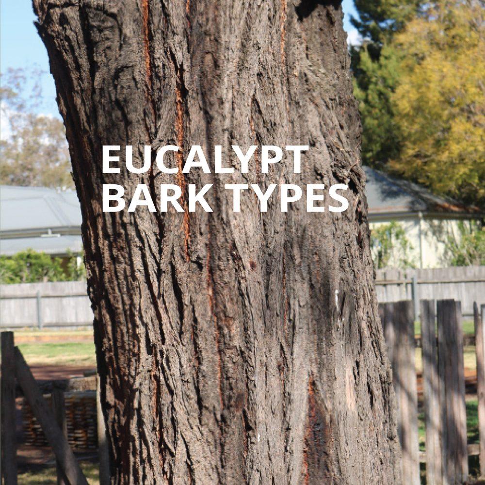 Eucalypt Bark Types