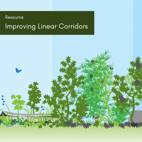 Improving Linear Corridors