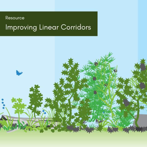 Improving Linear Corridors