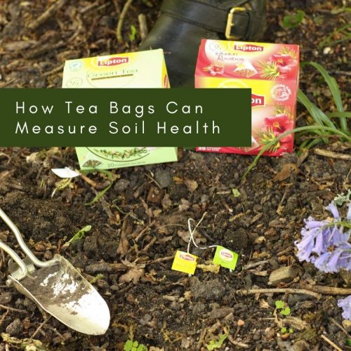 How Tea Bags Can Measure Soil Health