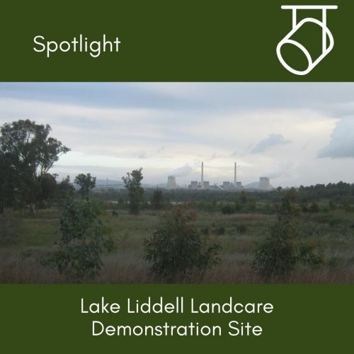 Spotlight on: Lake Liddell Landcare Demonstration Site