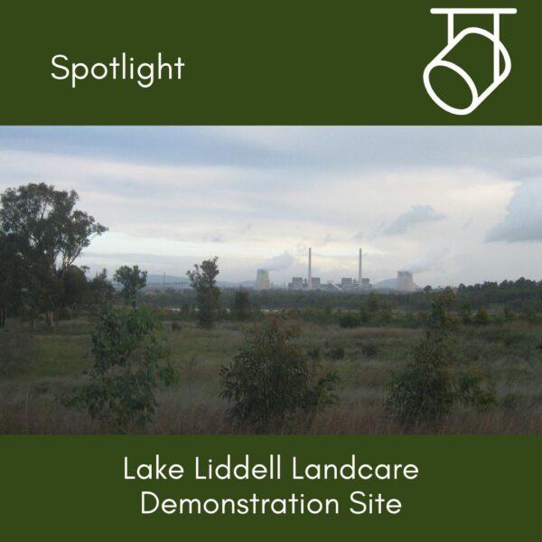 Spotlight on: Lake Liddell Landcare Demonstration Site