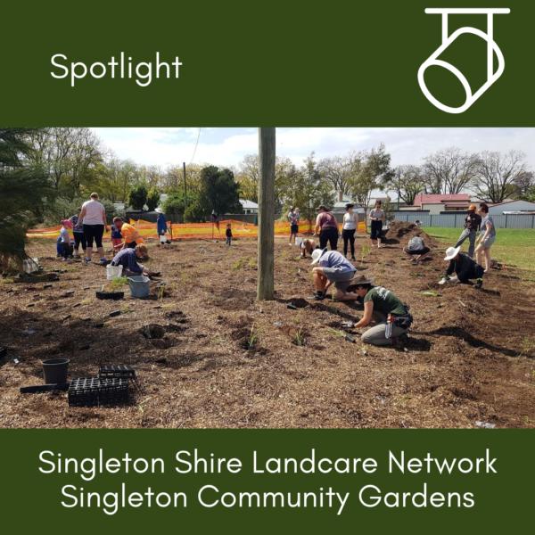 Spotlight: Singleton Community Gardens