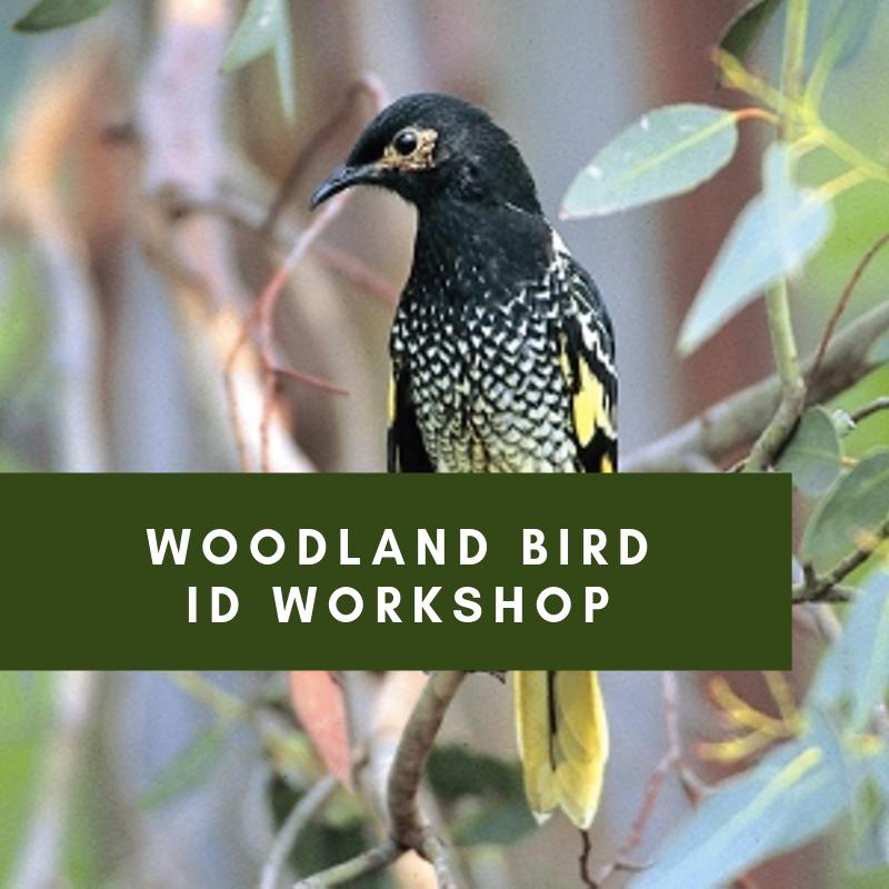 woodland Bird ID Workshop