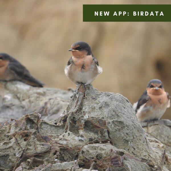 New App: Birdata