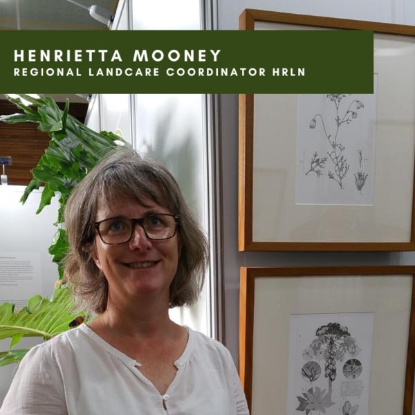 Introducing Henrietta