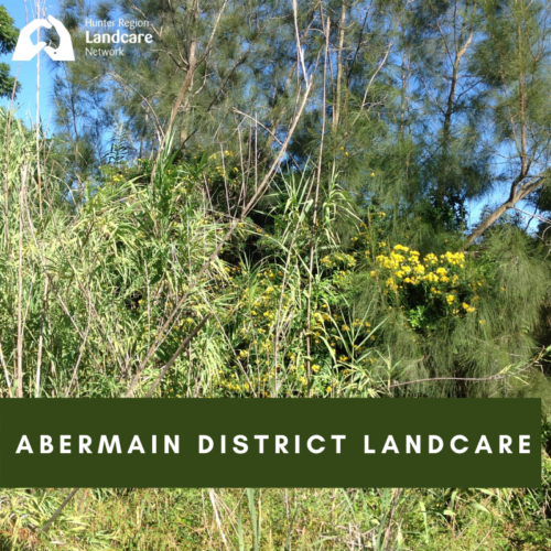 Abermain District Landcare