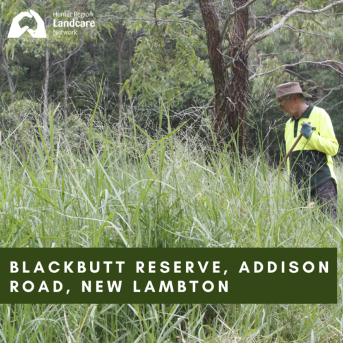 Blackbutt Reserve, Addison Road, New Lambton