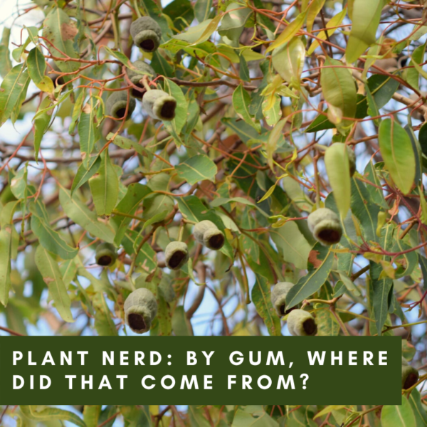 Ask a Plant Nerd: By Gum, Where Did That Come From?