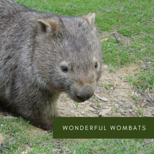 Wonderful Wombats