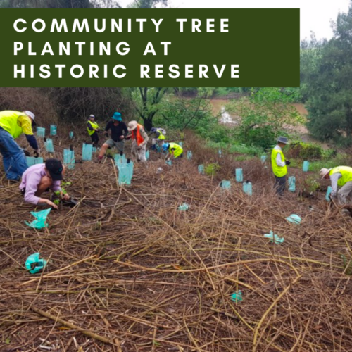 Community tree planting at historic reserve