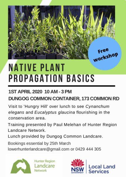 plant propagation basics