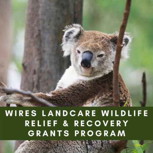 $1 Million of WIRES Landcare Wildlife Relief & Recovery Grants