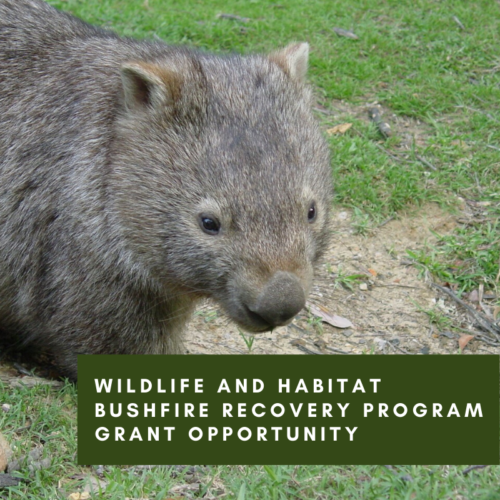 Wildlife and Habitat Bushfire Recovery Program Grant Opportunity