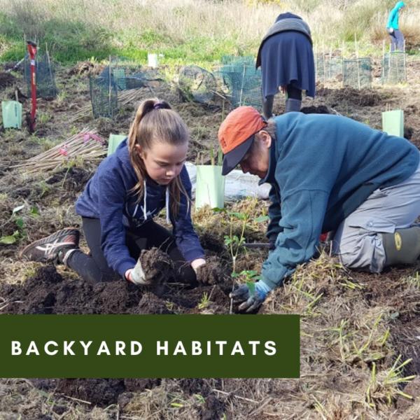 Build Your Own Backyard Habitat
