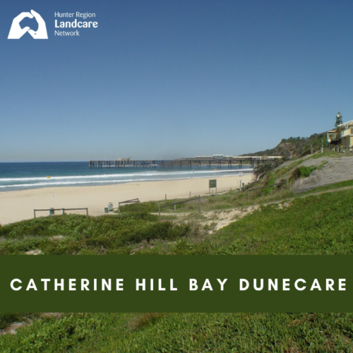 Catherine Hill Bay Dunecare