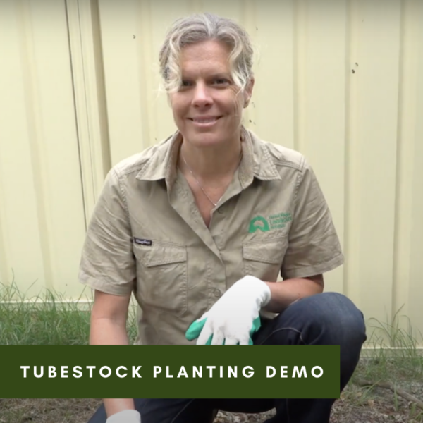 Tubestock Planting Demo