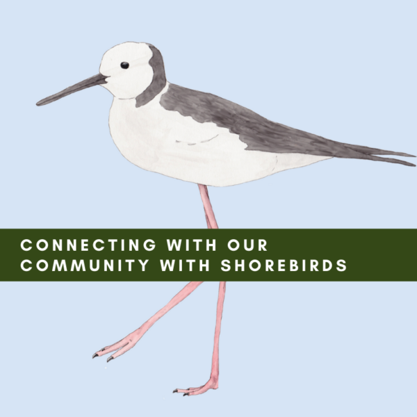 Connecting with our Community with Shorebirds