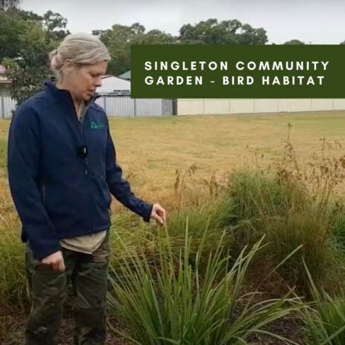 Singleton Community Garden – Bird Habitat