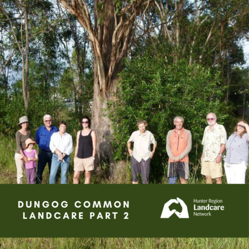 Dungog Common Landcare Part 2