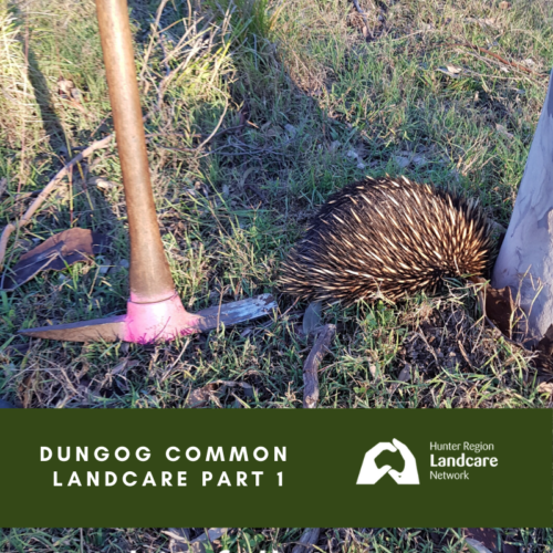 Dungog Common Landcare Part 1