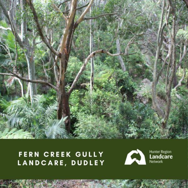 Fern Creek Gully Landcare, Dudley