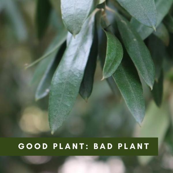 Good plant: Bad plant