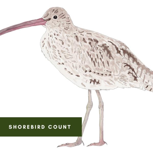 Shorebird Count