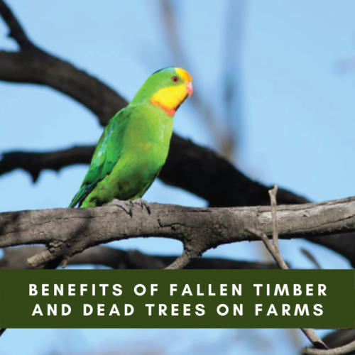 Benefits of Fallen Timber and Dead Trees on Farms