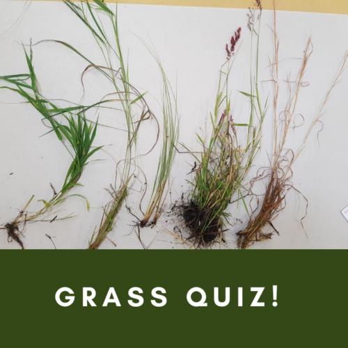Grasses quiz
