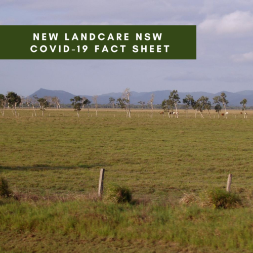 NEW Landcare NSW COVID-19 Fact Sheet