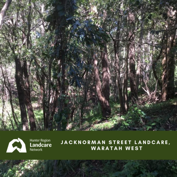 Jacknorman Street Landcare, Waratah West