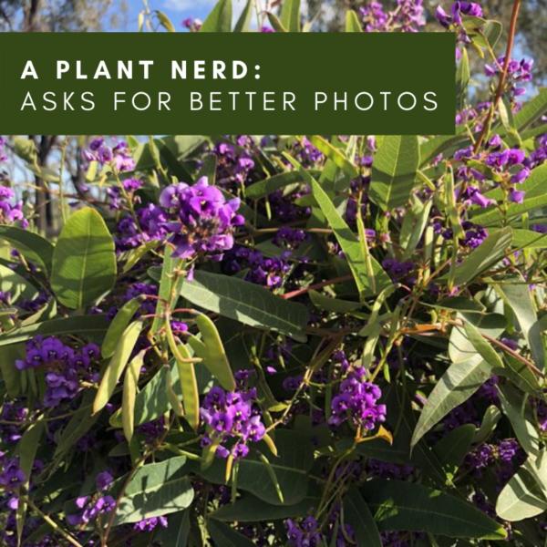 A Plant Nerd Asks (for better photos)