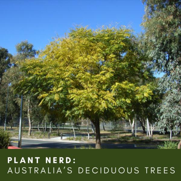Ask a Plant Nerd: Australia's Deciduous Trees