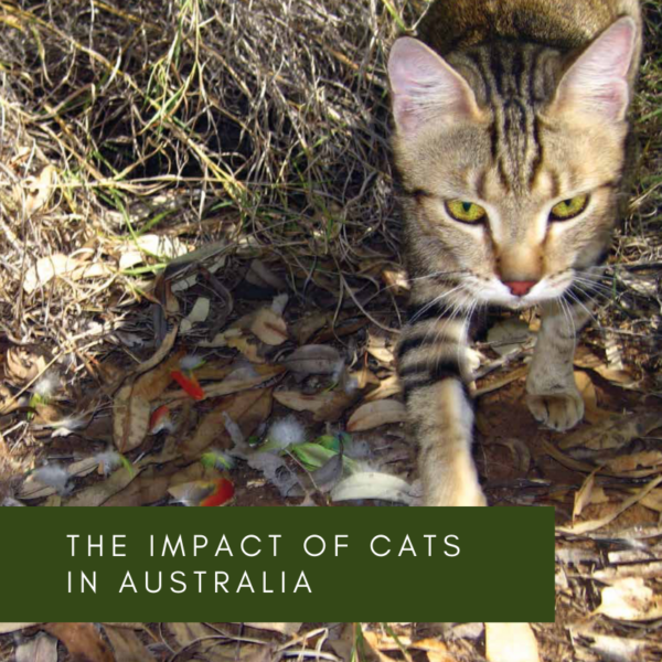 The impact of cats in Australia