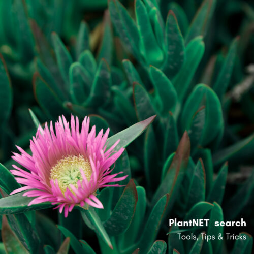 PlantNET Search – Find your local plants