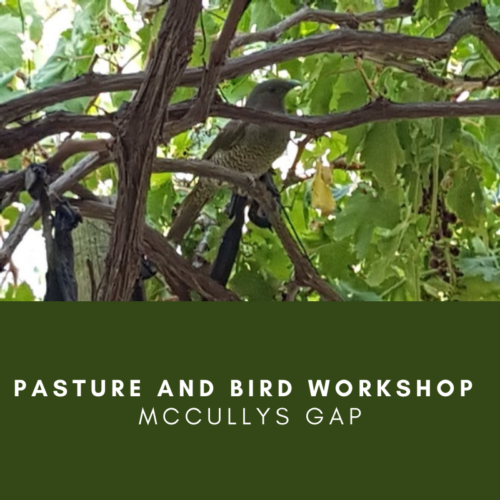 Pasture and Bird Workshop – McCullys Gap