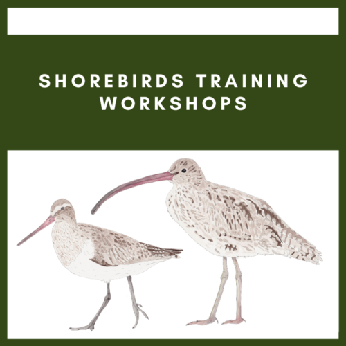 Shorebirds Training Workshops